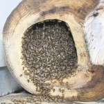 bottom view of tipped hive