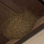 Apis cerana japonica under eave of house Nishi Irube, Fukuoka