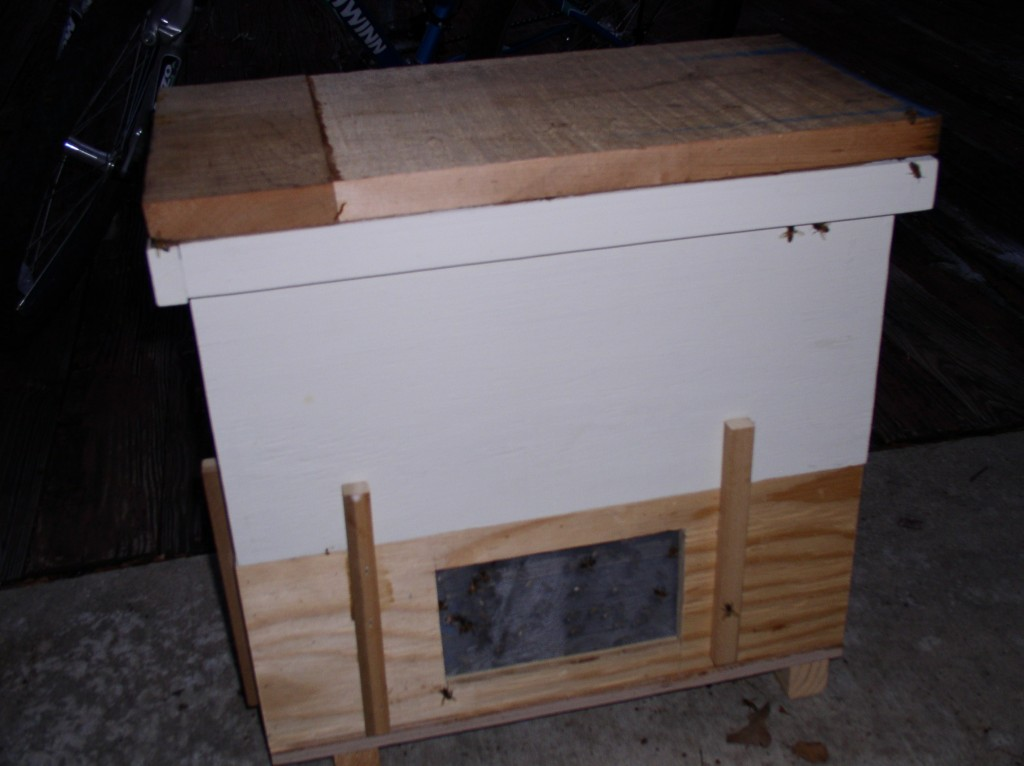 "The ""Starter Hive"""