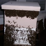 this hive has shims at the top for better ventilation